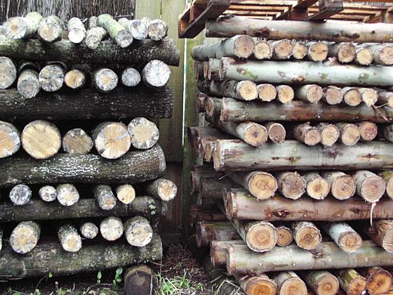 resting shiitake logs